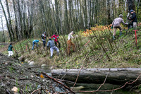 TRESTLE PLANTING - BROWNLANDS WETLAND RESTORATION PROJECT - Sombilon Photography-92
